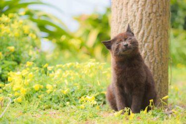 野良猫への餌付けは『NG』です!